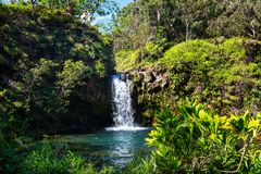 Waterfall on Hawaii. Beautiful tropical waterfall in Hawaii Royalty Free Stock Photography