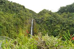 Waterfall in Hawaii surrounded by vegetation wet from the Rain. Big Island, USA, EEUU Royalty Free Stock Image
