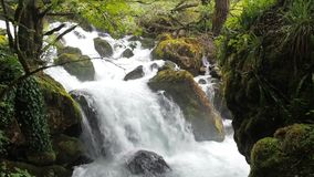 Waterfall in a humid tropical forest. Stormy stream of a mountain river. Clean water rises up and foams. A stormy stream. Of spike with a spray slow motion flat stock video