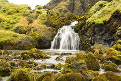 Waterfall in iceland. In lava flow and green moss Stock Image