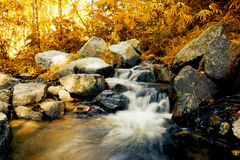 Free Waterfall In Autumn Forest Stock Image - 72118181