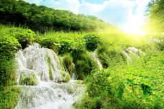 Free Waterfall In Deep Forest Stock Images - 7545104