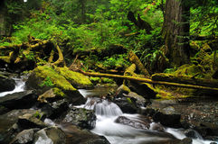 Free Waterfall In The Forest Stock Images - 8999094