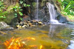 Waterfall with Japanese carp Stock Photo