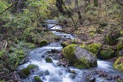 Waterfall. Jiuzhaigou . Stock Images