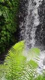 Waterfall in jungle, Bali stock video footage