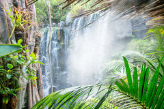 Waterfall in jungle. Stock Images