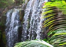 Waterfall in jungle. Stock Photos