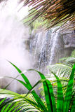 Waterfall in jungle. Royalty Free Stock Photos