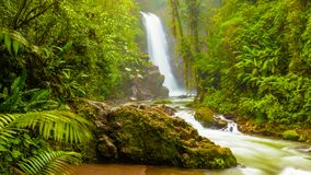 Waterfall in the jungle. Costa Rica royalty free stock photography
