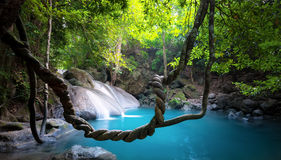 Waterfall in jungle forest nature background Royalty Free Stock Photography