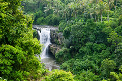 Waterfall in the jungle. Waterfall in the greenery jungle. Indonesia. Bali Royalty Free Stock Photography