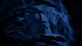 Waterfall In The Jungle At Night. Waterfall with tropical plants in the dark jungle smooth water surface stock video footage