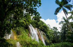 Waterfall in jungle Stock Image