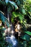Waterfall Jungle Plants Flowing Water Rocks Royalty Free Stock Image