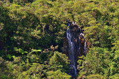 Waterfall in jungle Stock Images