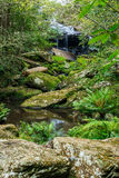 Waterfall in jungle Royalty Free Stock Photos
