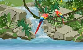 Waterfall in the jungle. Two bright macaw parrots on vines. Rock, creepers, banana trees and epiphytic ferns vector illustration