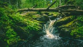 Waterfall in Karelia. Small waterfall in Karelia and fallen tree Stock Photo