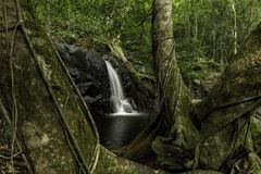 Waterfall with large trees Stock Photos