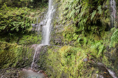 Waterfall in the Levada of Caldeirao Verde, Madeira, Portugal Royalty Free Stock Photography