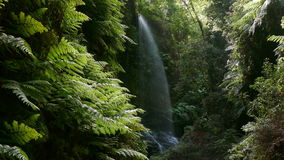 Waterfall `The Lindens`,in Island of La Palma, Canary Islands, Spain stock footage