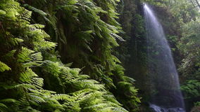Waterfall `The Lindens`,in Island of La Palma, Canary Islands, Spain. stock video footage