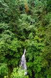 Waterfall and Lush Forest Stock Photo
