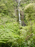 Waterfall in lush Forest Waitakere, New Zealand Royalty Free Stock Photo