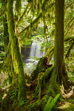 Waterfall in lush green mossy forest Royalty Free Stock Photography
