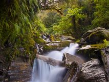 Temperate rainforest waterfall. Waterfall in a lush new zealand temperate rainforest Stock Photo