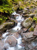 Waterfall in lush rain forest Stock Images
