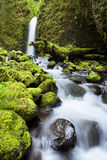 Waterfall in lush rainforest, Columbia River Gorge, Orego Stock Images