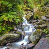 Waterfall in temperate New zealand rain forest. Waterfall in Lush Temperate Rainforest on the rainy west coast of New Zealand royalty free stock photos