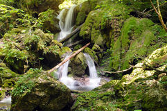 Waterfall made from tufa. Typical cascade waterfall made from tufa with bryophytes non-vascular land plants Stock Image