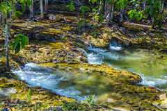 Waterfall mangrove forest at Krabi in Thailand Royalty Free Stock Photo