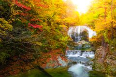 Waterfall among many foliage, In the fall leaves Leaf color change In Yamagata, Japan royalty free stock photos