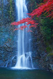 Waterfall with maple Stock Image