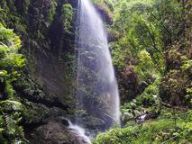 Waterfall in the middle of the Canarian jungle on La Palma, a Canary Island stock images