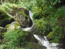 Waterfall. Mini waterfall in the forest Royalty Free Stock Image