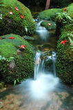 Waterfall moss Royalty Free Stock Photography