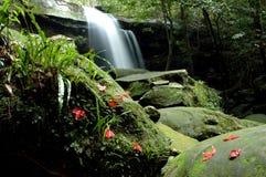 Waterfall moss. The beautiful waterfall at Phukradung National Park in Thailand Royalty Free Stock Photo