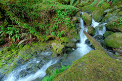 Waterfall through a moss covered rock area Royalty Free Stock Photography