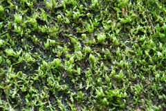 Waterfall moss Royalty Free Stock Images