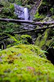 Waterfall. Moss of water fall Royalty Free Stock Image