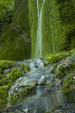 Waterfall on mossy background Stock Photos