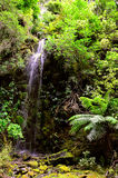 Waterfall at Mount Richmond Forest Park Stock Photos