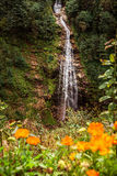 Waterfall in mountain forest. Royalty Free Stock Photo