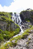 Waterfall in the mountain with a horse Royalty Free Stock Images