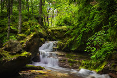 Waterfall. Mountain waterfall in the forest with ferns. Royalty Free Stock Images
